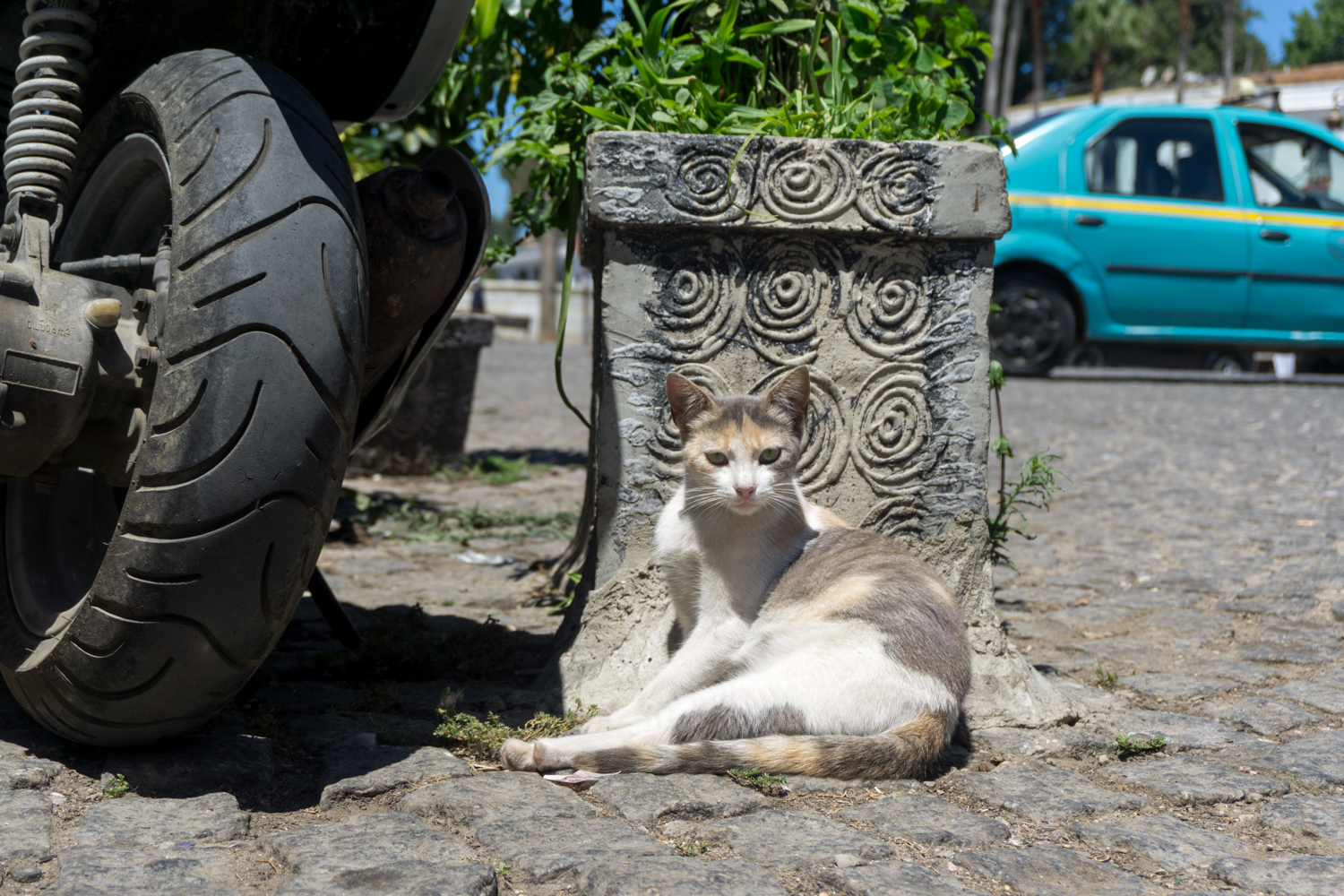 Cats are everywhere in Morocco. This one, like most, was catching some rest in the middle of a long hot day.