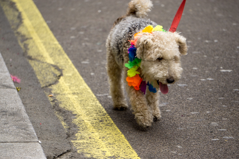 London_Pride-16